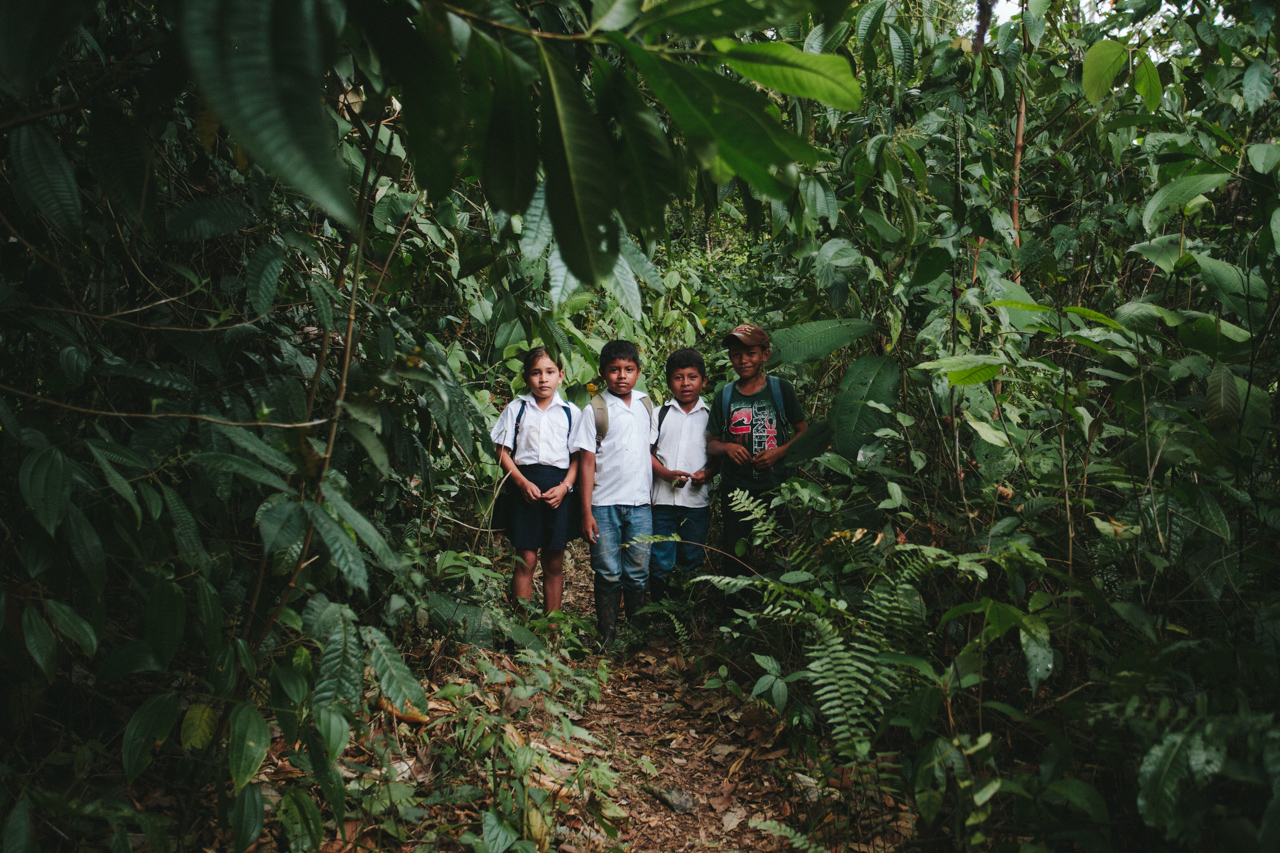 To get to school you need to break through the jungle first. Jarelis - first on the left.