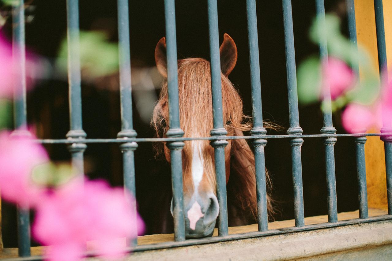 stables Nicaragua