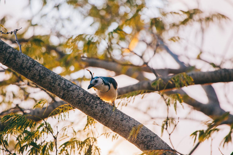 Nicaragua Bird watching the wedding