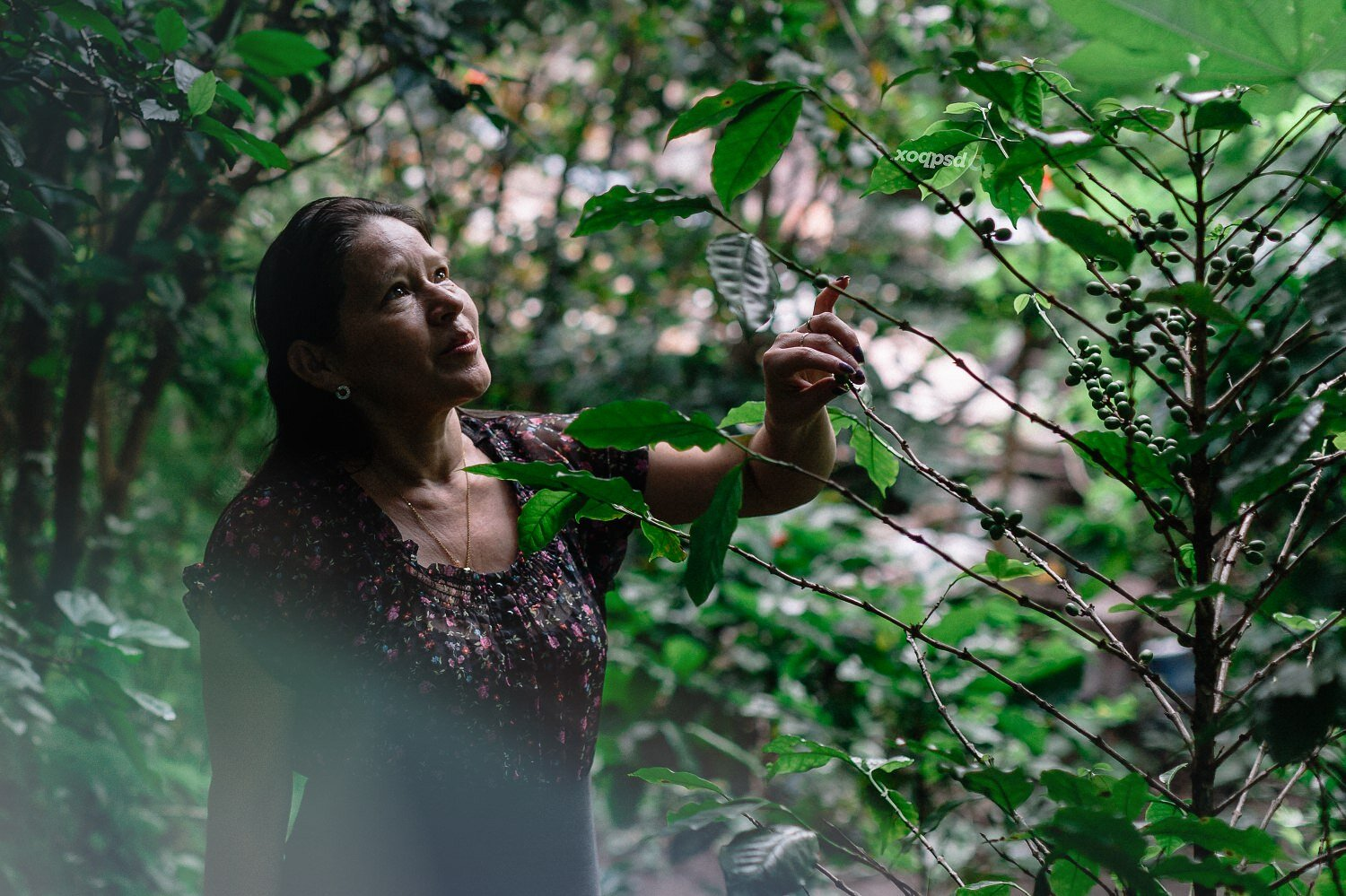 Coffee Producer reviewing Plants Photography-Exposure.jpg