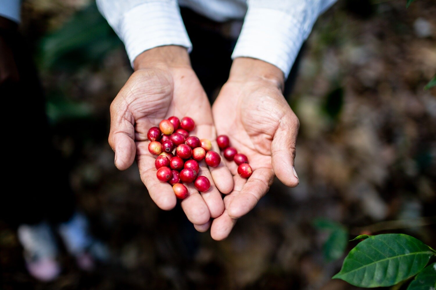 Coffee beans photograpy Guatemala Colombia-Exposure.jpg