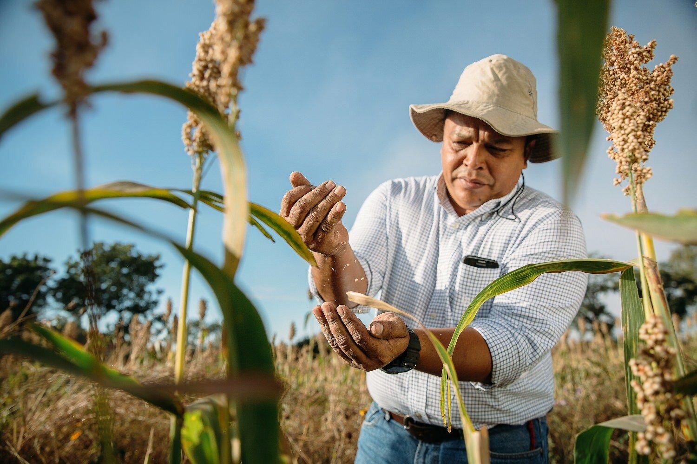 Sorghum farmer cargill nicaragua guatemalaSorghum farmer cargill nicaragua guatemala.jpg