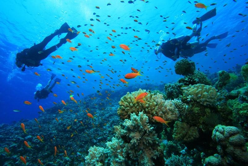 outdoors_diving2.jpg