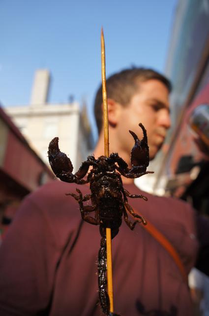 scorpion4.jpg
