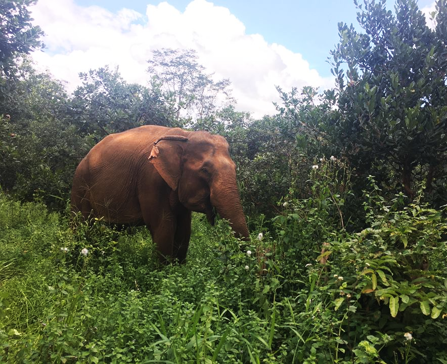 Elephant Encounter in Cambodia