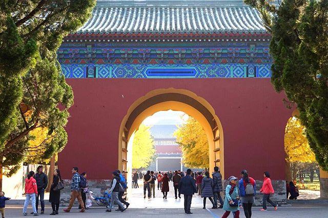 The golden leaves of Beijing. So much to see and explore at the Temple of Heaven. ⠀ .⠀ .⠀ .⠀ #templeofheaven #china #beijing #beijinglife #chinatravel #worldexplorer #travelfar #wanderoften #letsflyaway #travelerlife #travelpassion #femmetravel #mytinyatlas #explorerbabes #gltlove #pinktrotters ⠀ ⠀ #theasiacollective #travelcommunity #travelobsessed⠀ ⠀ #dreamscape #borntotravel