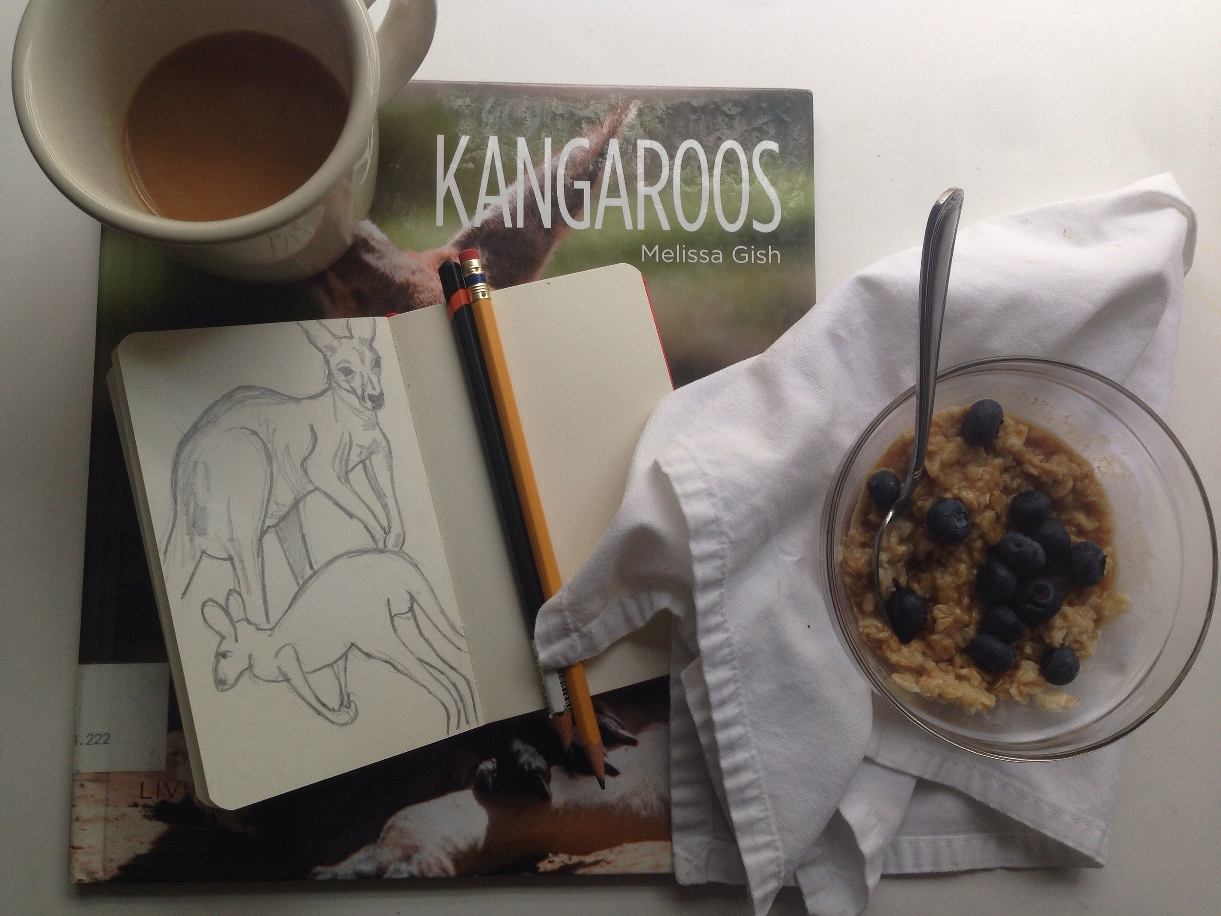 kangaroos | year of creative habits