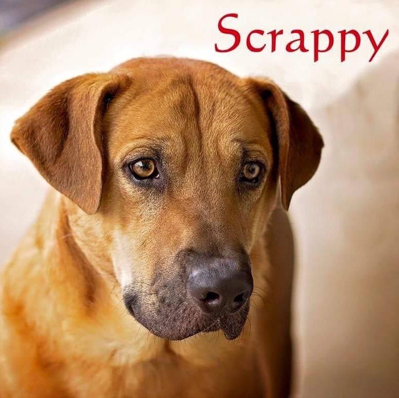 Scrappy | Rescue One