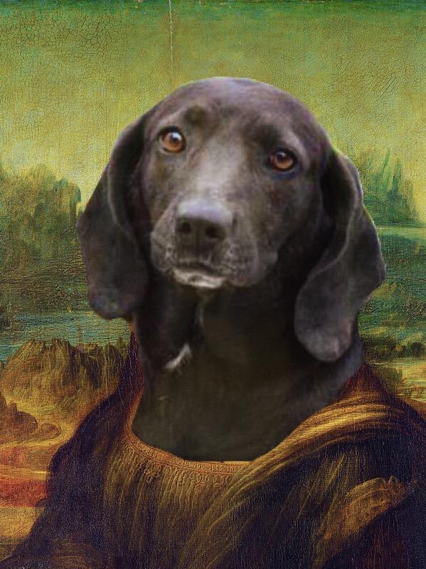 Mona Lisa the dog | year of creative habits