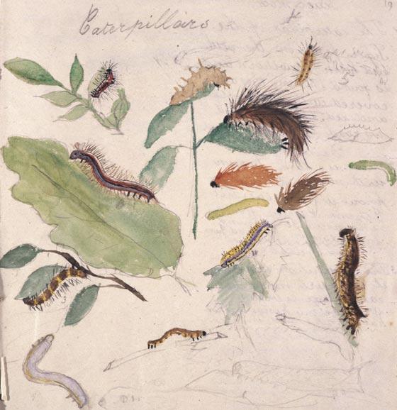 caterpillars study at age 9