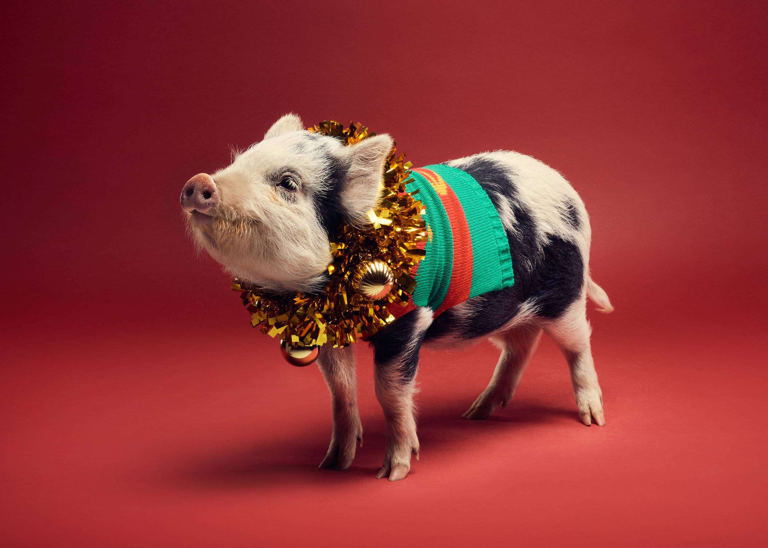 NPP_SaveTheChildrenPigs_0404-Edit-Edit-3.jpg