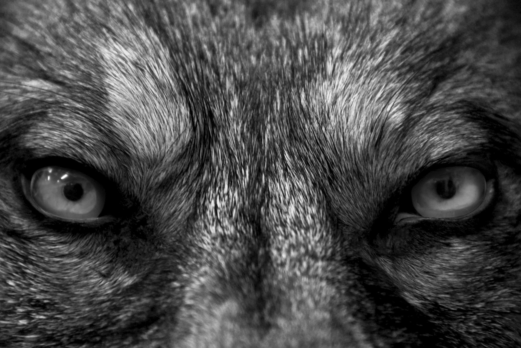 The Wolves of Grayson.jpg