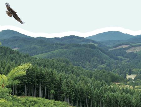 Oregon Forest Resources Institute