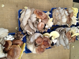 Mushrooms, or seashells? The artfulness of each crate blew me away.