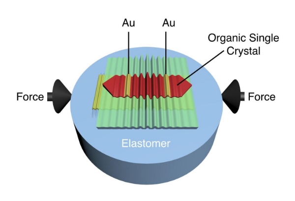 Schematic of wrinkled rubrene single-crystal field-effect transistor. Wrinkles are obtained when in-plane compressive strain is applied on the elastomeric substrate. Electric current between gold (Au) electrodes is modulated by the deformation imposed by the wrinkles. Courtesy UMass Amherst.