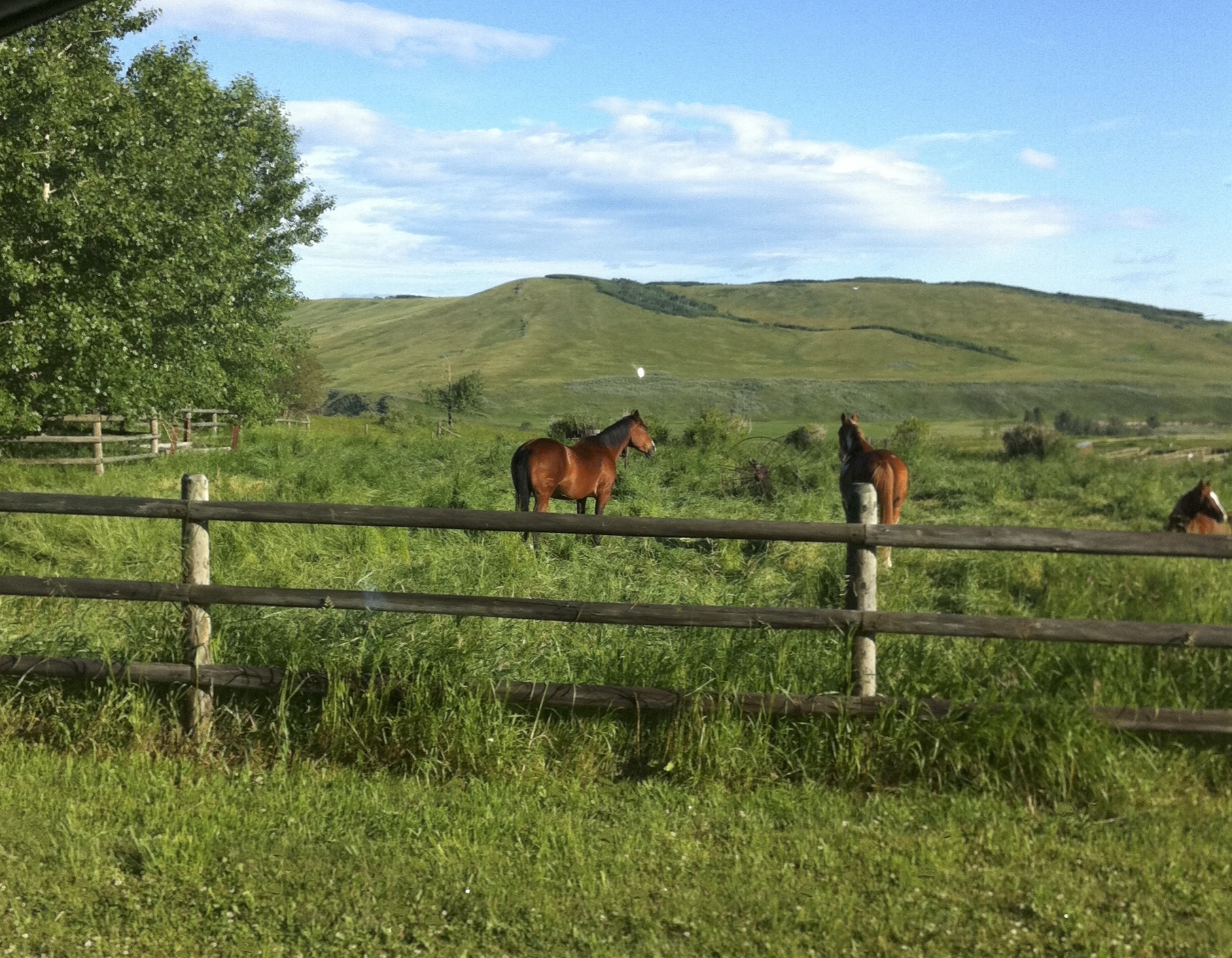 If only all farms could look like this :) A view from a home visit a few years back.