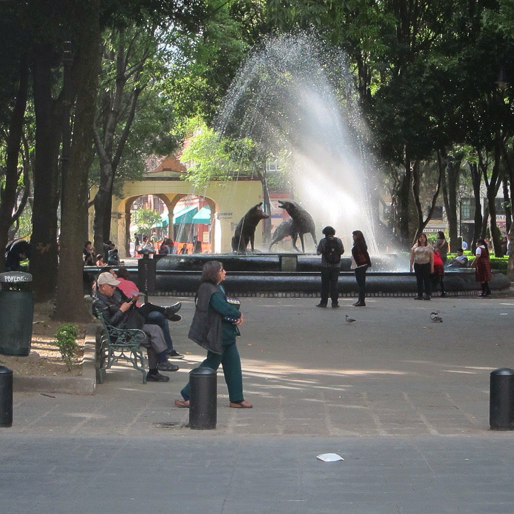 Coyoacan. A lovely place to take a date or spend a relaxing afternoon alone.