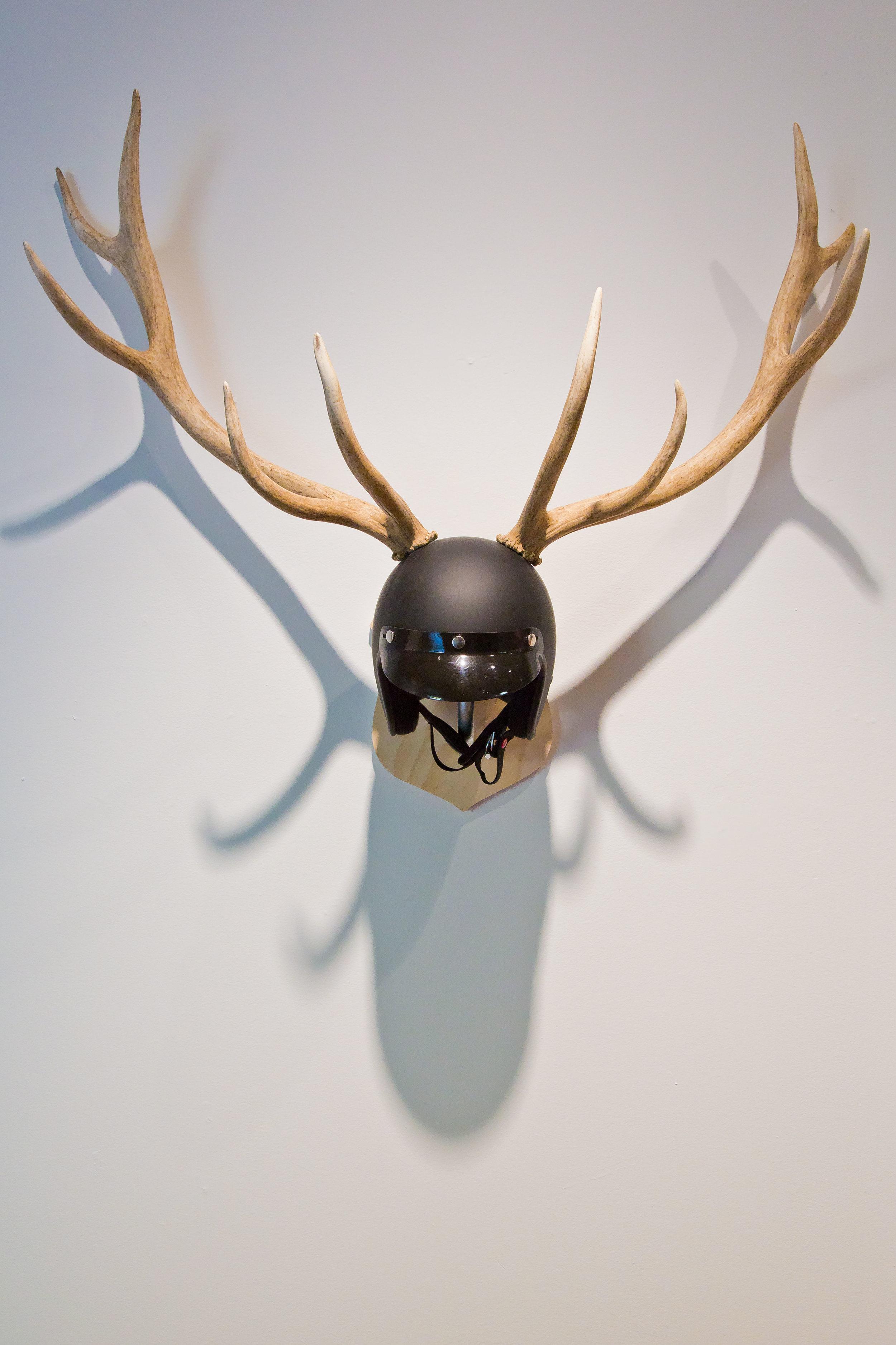 Elk_Antlers.jpg