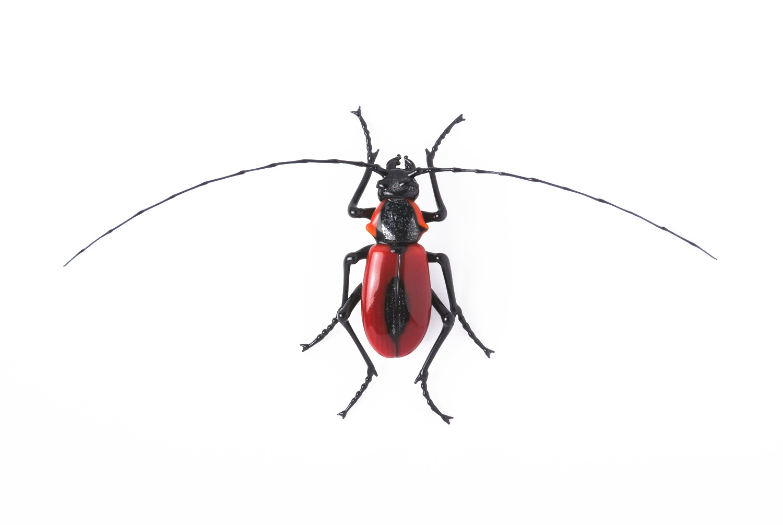 "Vittorio Costantini, Family: Cerambycidae ""Purpuricenus Kaehleri"" (2005, soda-lime glass, 2 5/16 x 4 11/16 x 5/8 inches), VC.34"