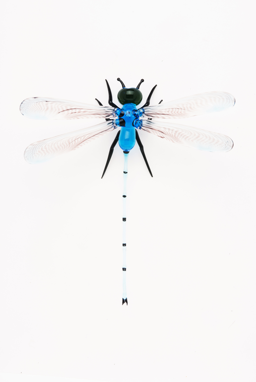 Vittorio Costantini, Family: ibelluloidae, Order: Odonata (2005, soda-lime glass, 3 5/16 x 3 1/8 x 1 1/8inches), VC.32