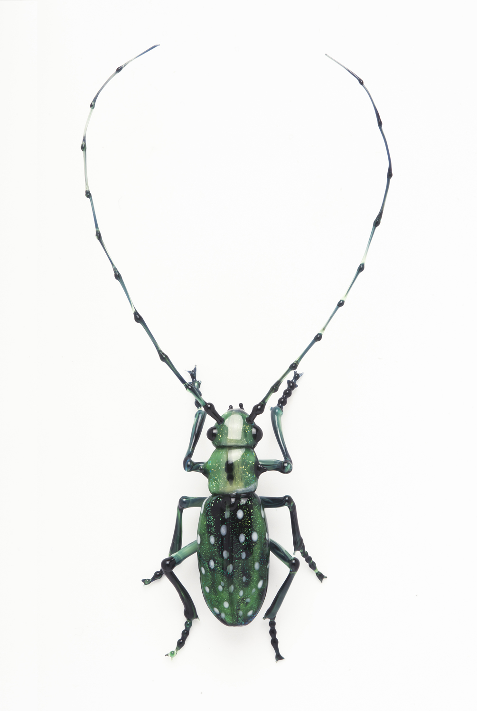 Vittorio Costantini, Cerambycidae Lamiinae Calloplophora solli (2005, soda-lime glass, 4 3/16 x 2 1/16 x 5/8 inches), VC.66