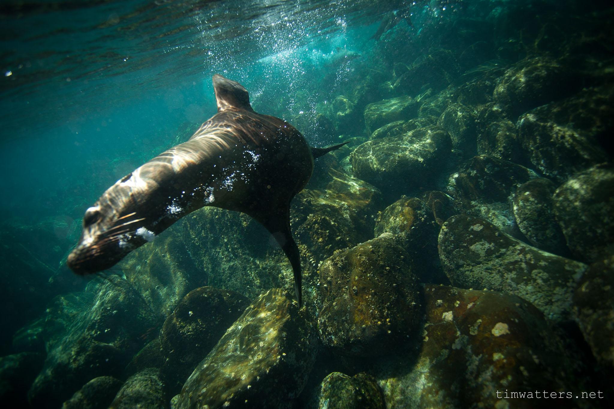 TimWatters_Underwater_15.jpg