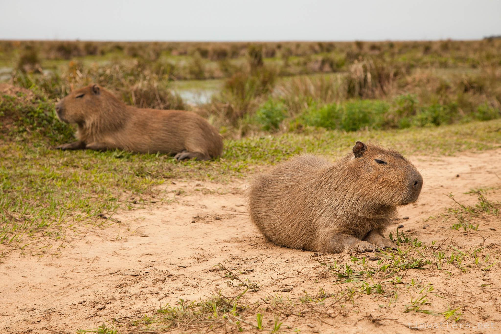 002-TimWatters-Ibera-Wildlife.jpg