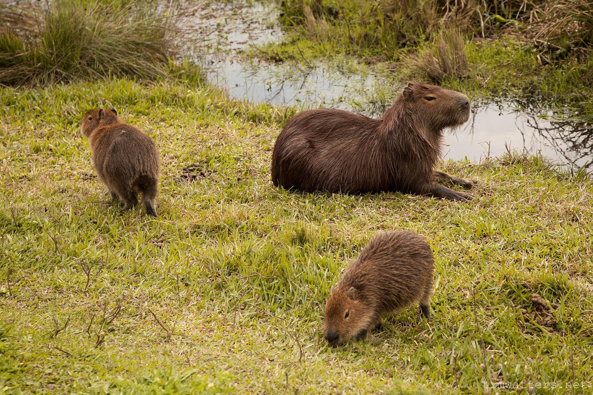 004-TimWatters-Ibera-Wildlife.jpg