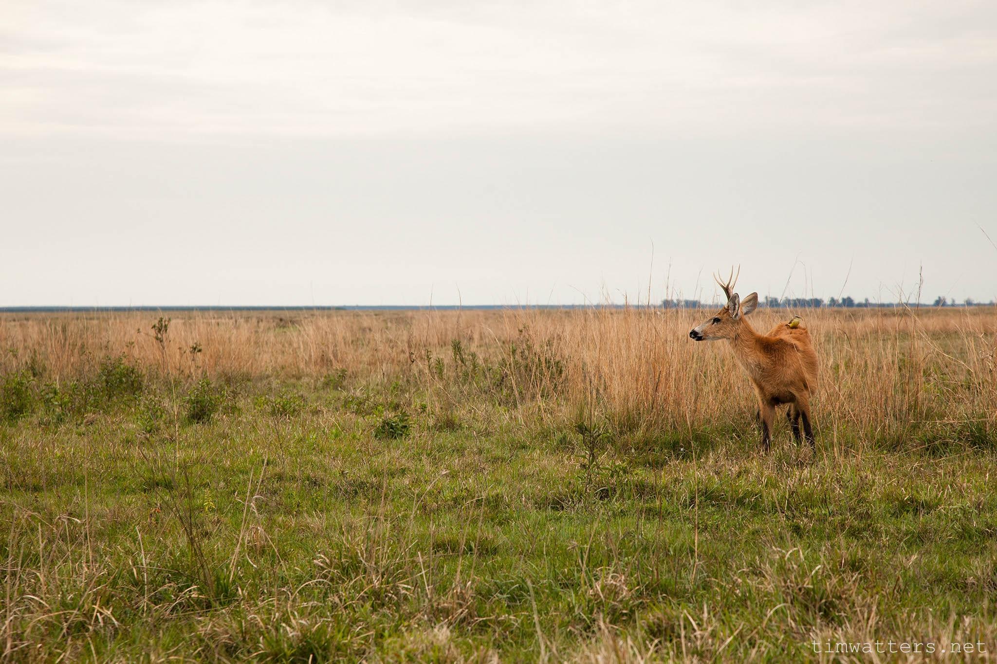 008-TimWatters-Ibera-Wildlife.jpg