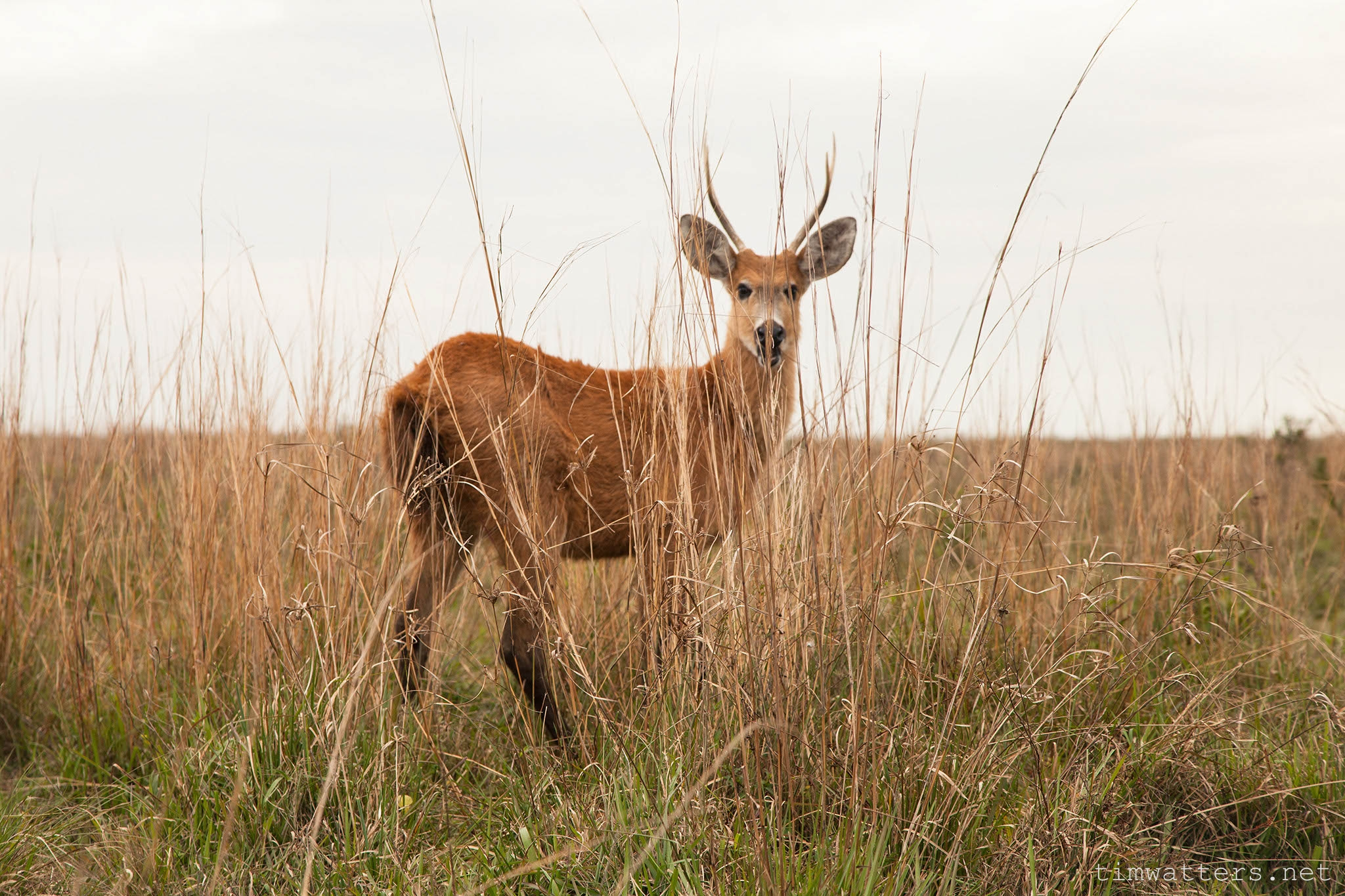 009-TimWatters-Ibera-Wildlife.jpg