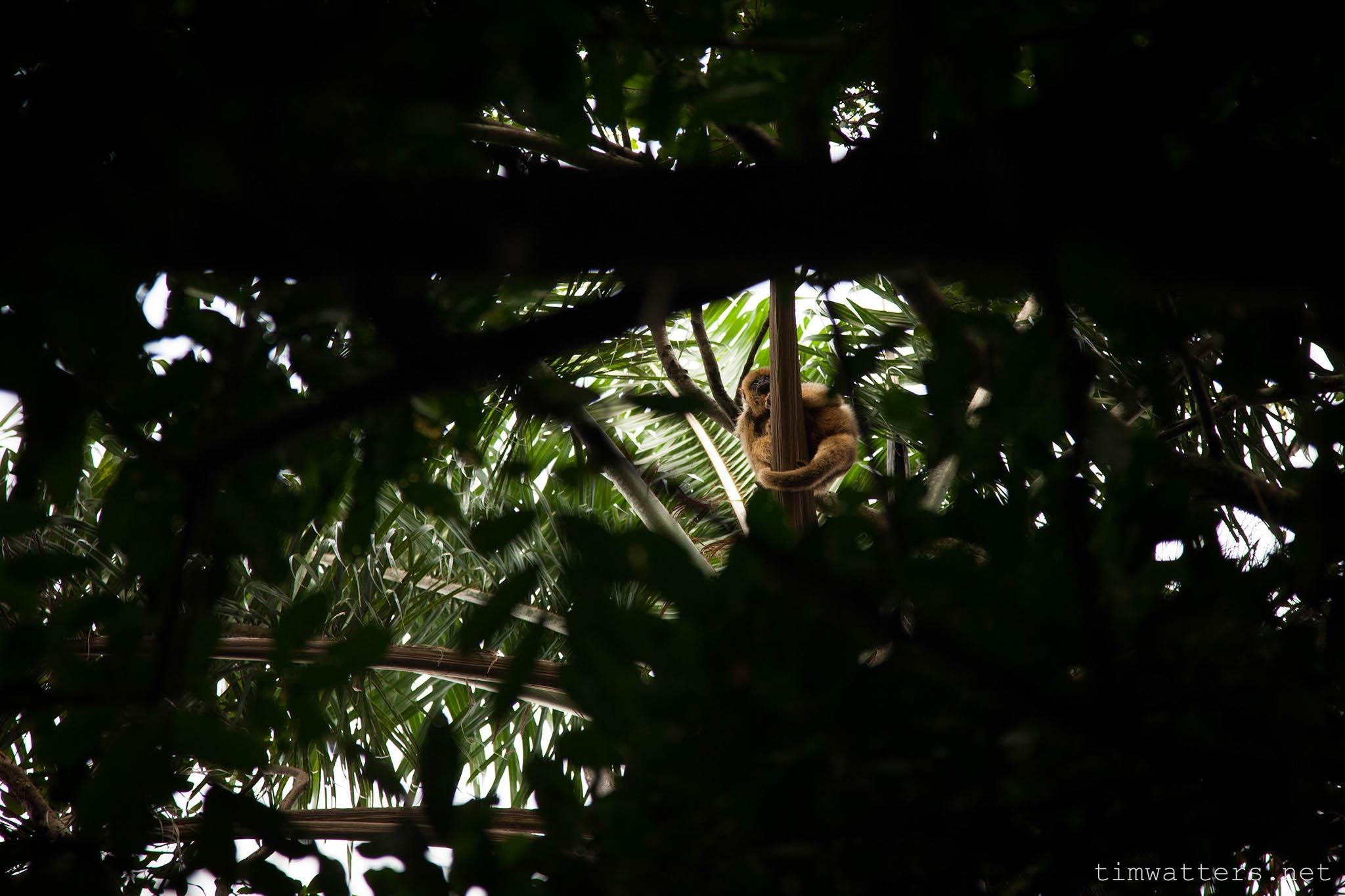 010-TimWatters-Ibera-Wildlife.jpg