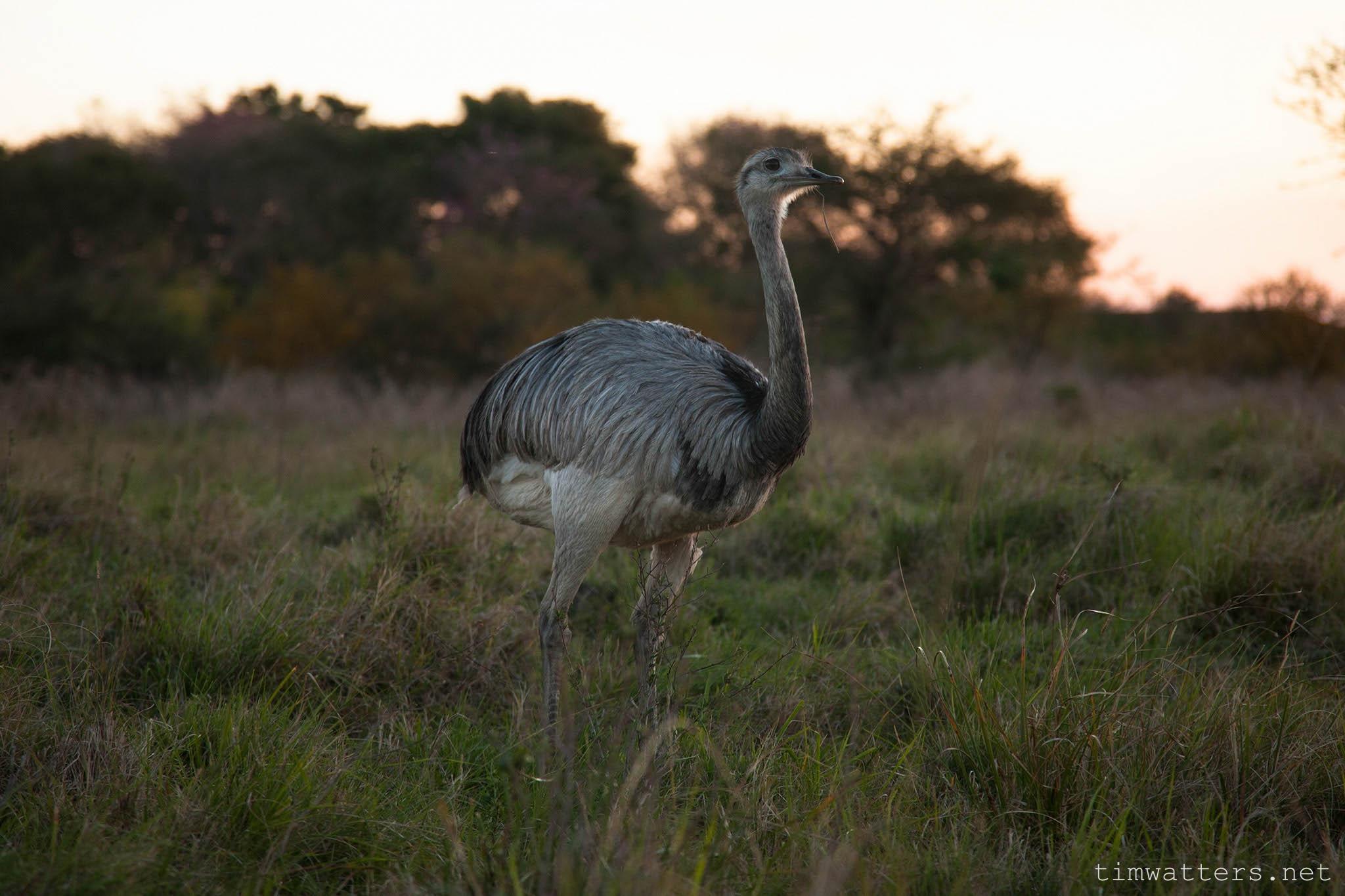 011-TimWatters-Ibera-Wildlife.jpg