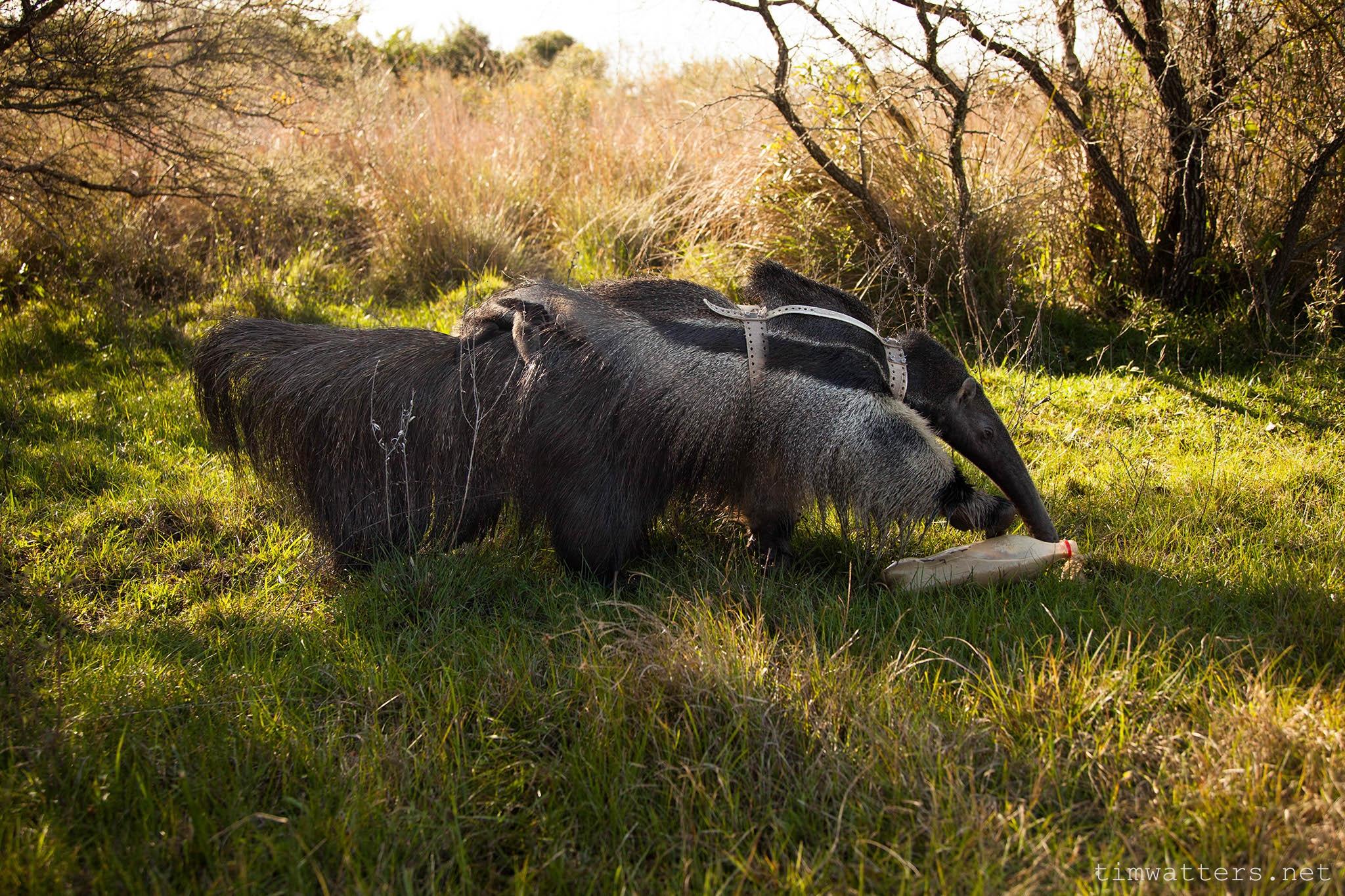 012-TimWatters-Ibera-Wildlife.jpg