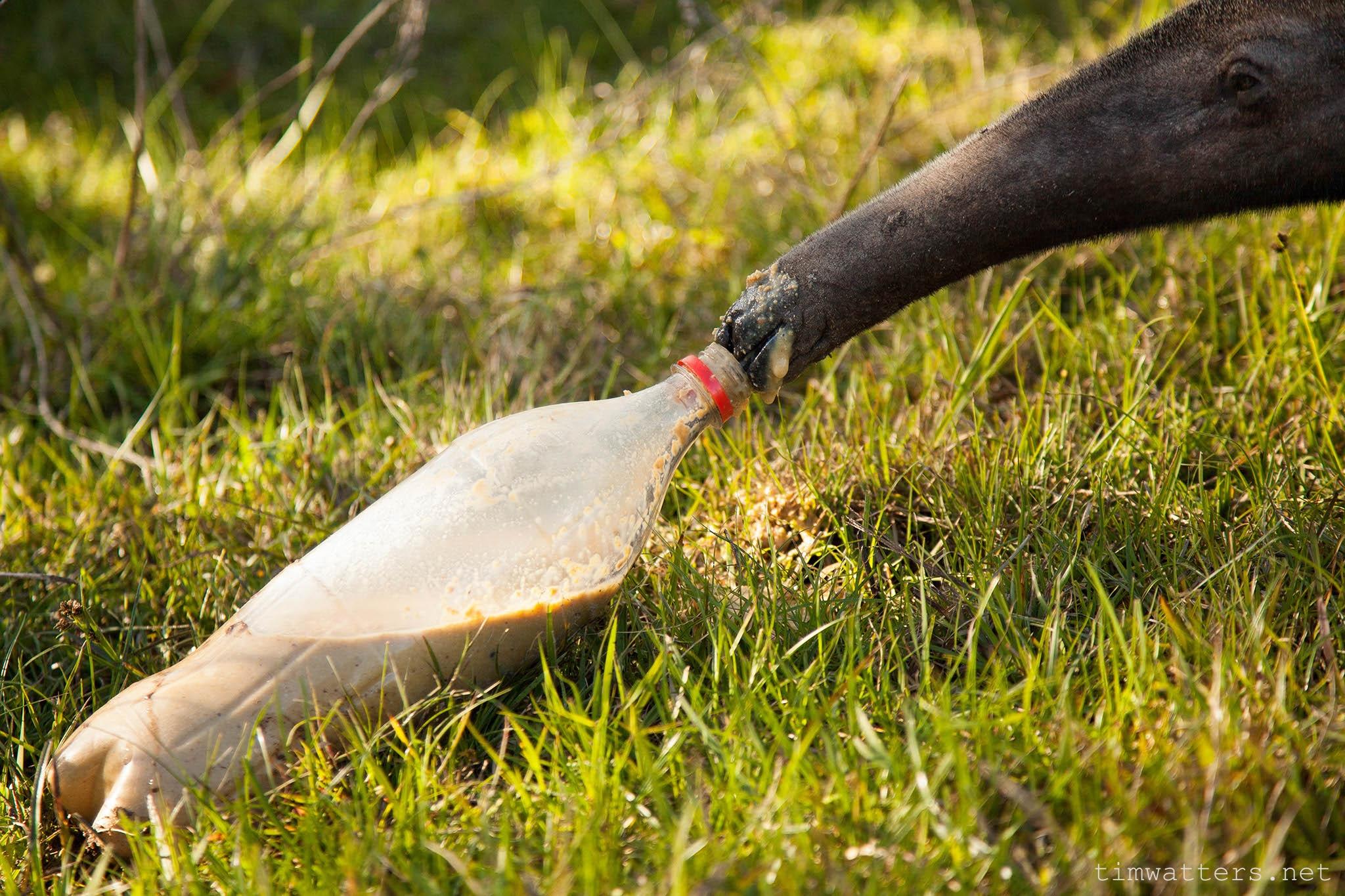 013-TimWatters-Ibera-Wildlife.jpg