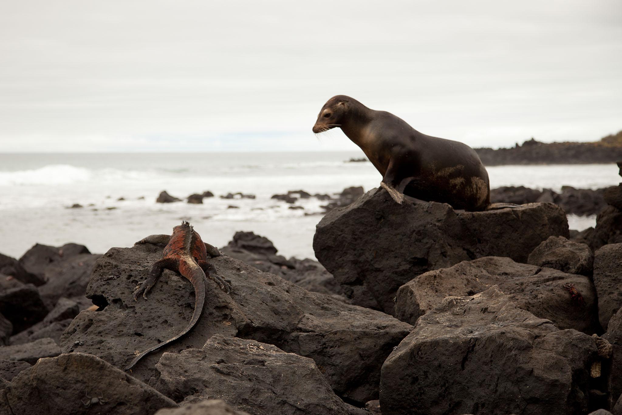 001-TW-Galapagos-121118.jpg