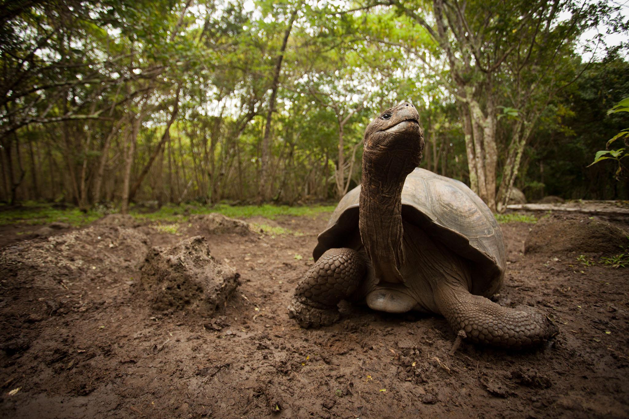 007-TW-Galapagos-121118.jpg