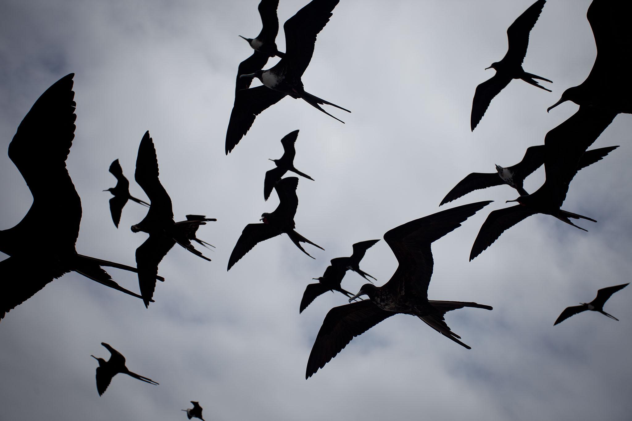 009-TW-Galapagos-121118.jpg