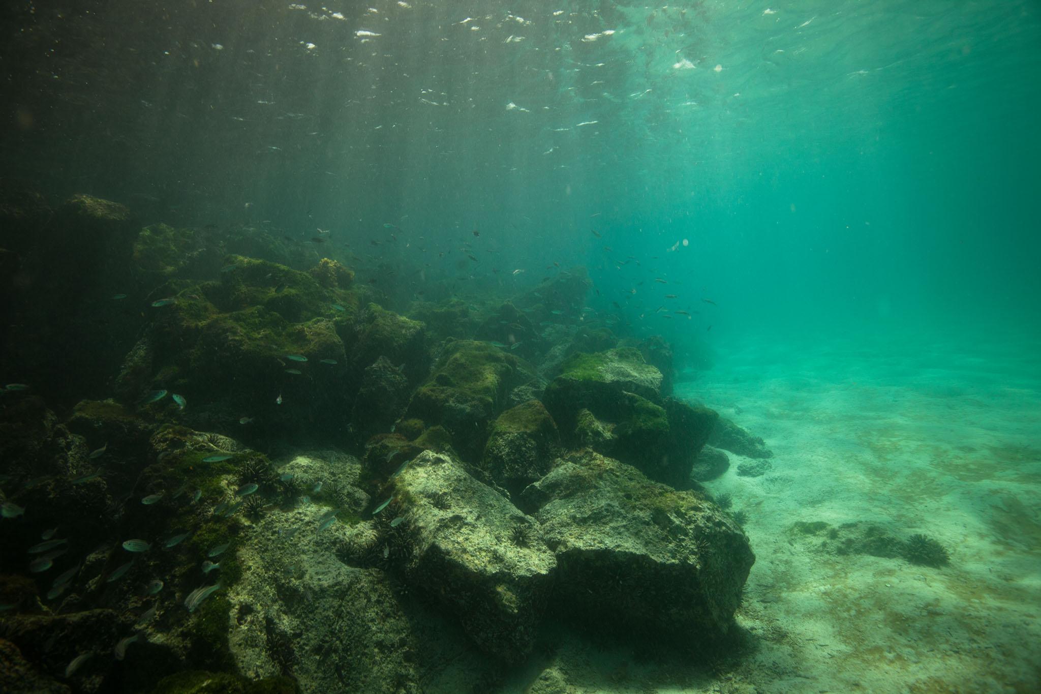 012-TW-Galapagos-121118.jpg