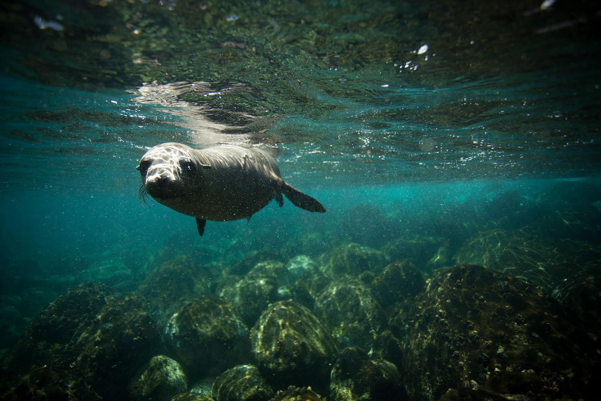 016-TW-Galapagos-121118.jpg