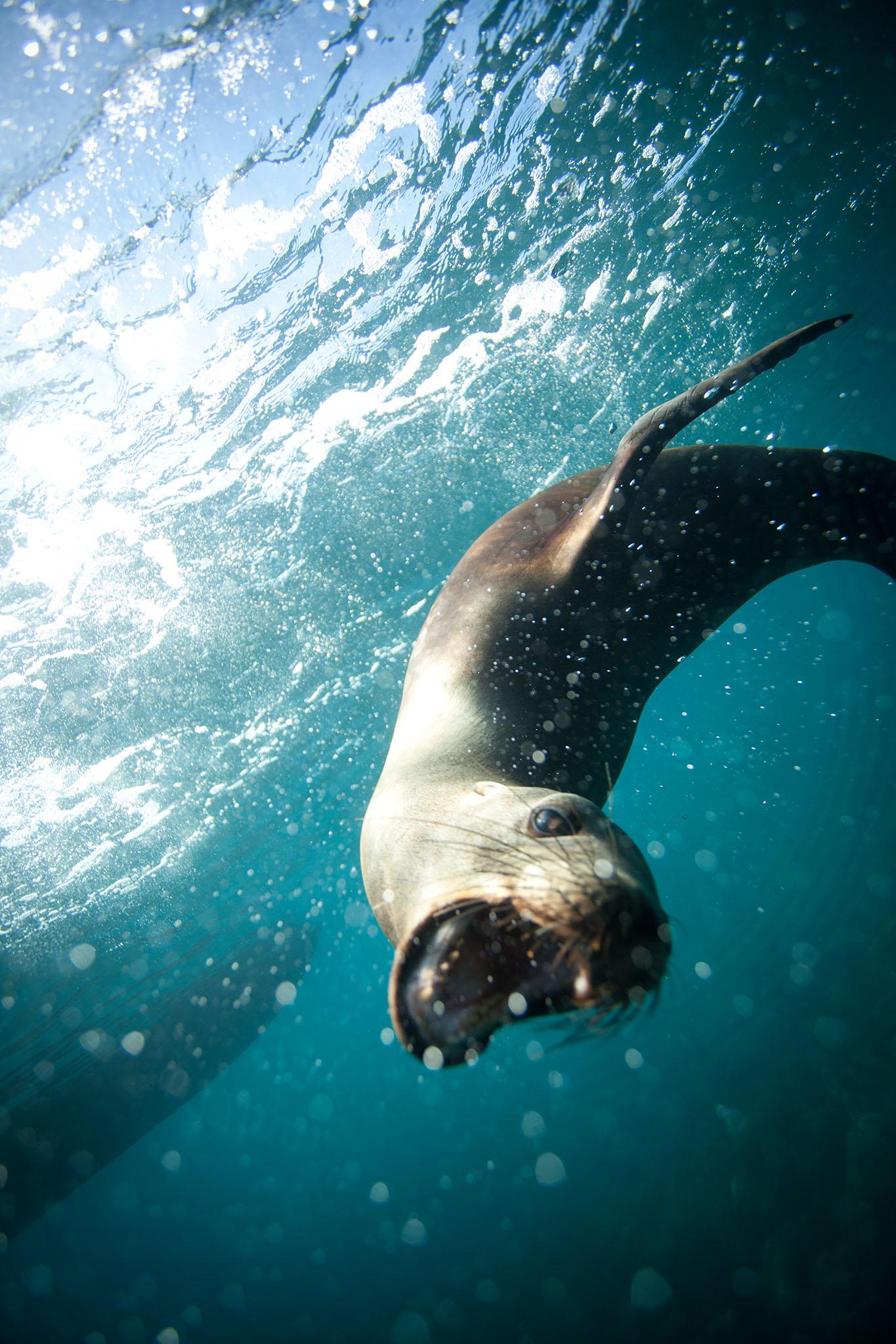 019-TW-Galapagos-121118.jpg