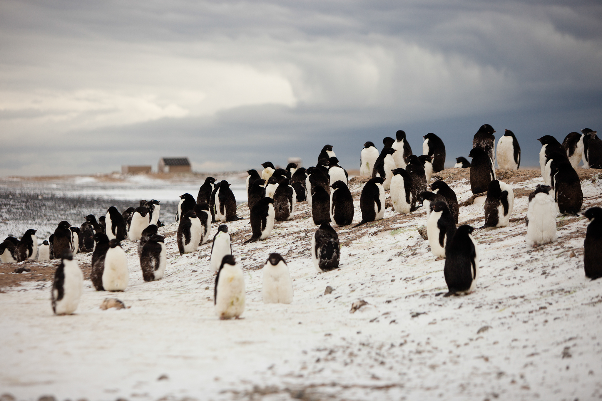 004-TW-Antarctica-140305.jpg