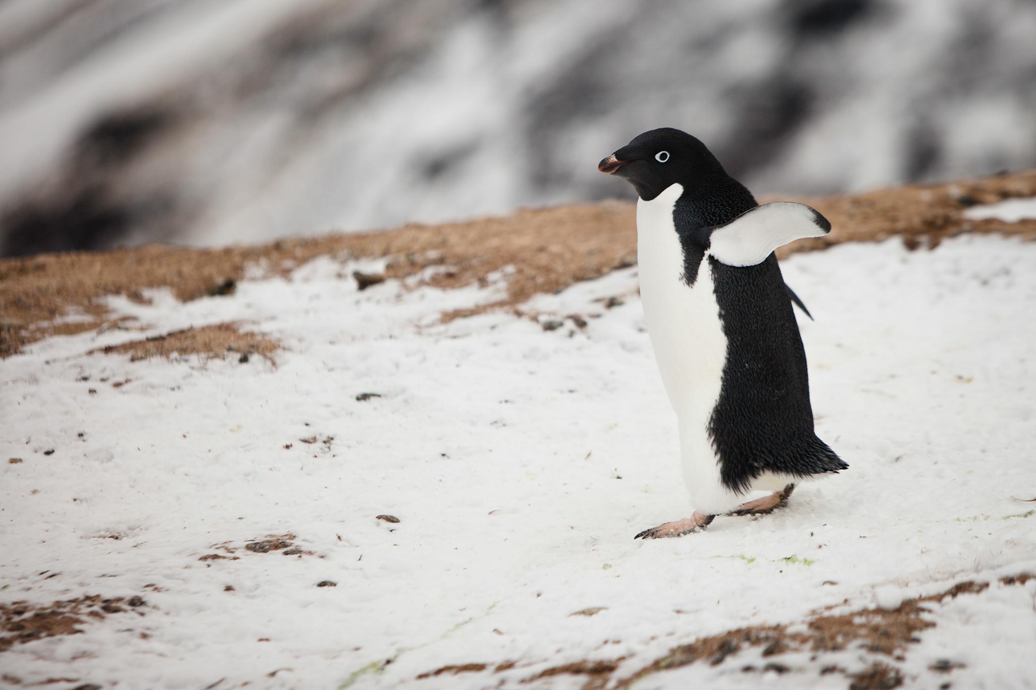 006-TW-Antarctica-140305.jpg