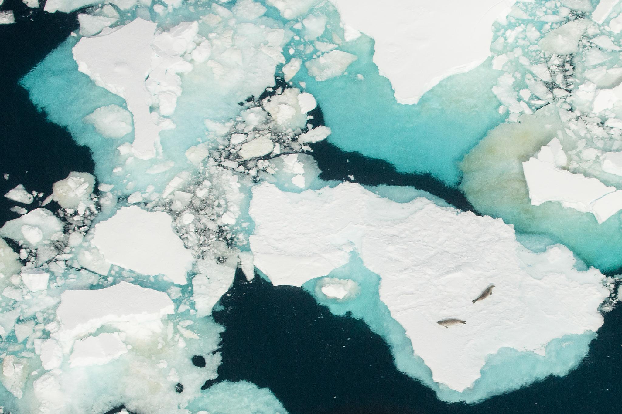 009-TW-Antarctica-140105.jpg