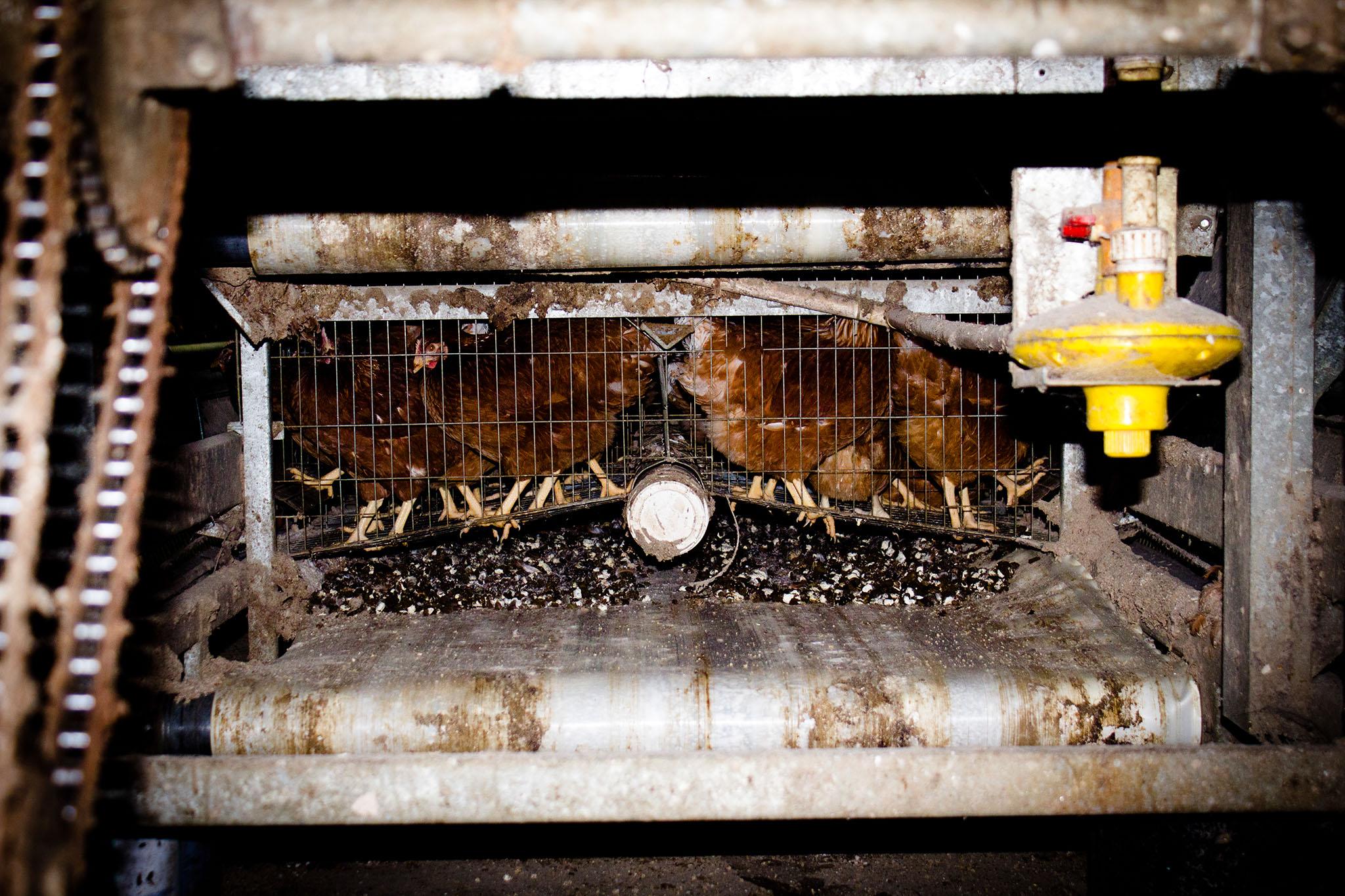 007-TW-FactoryFarming-130530.jpg