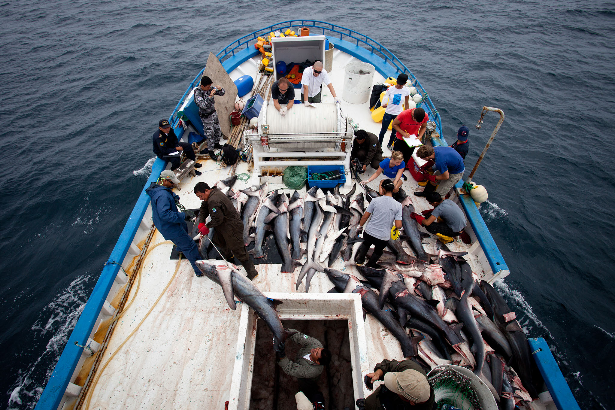 HumanAnimal__Shark_Finning_11.jpg