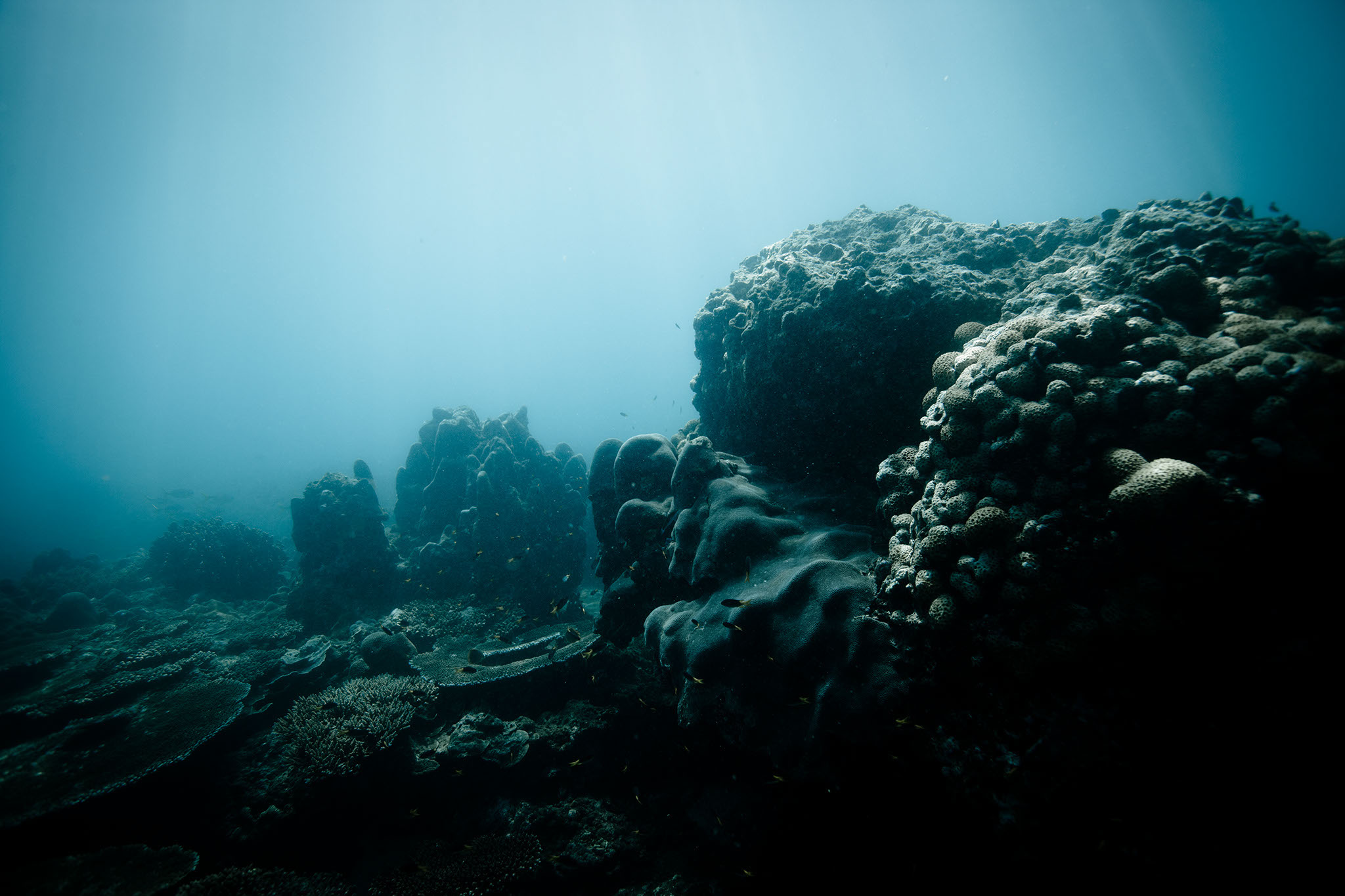 TimWatters-Underwater-01.jpg