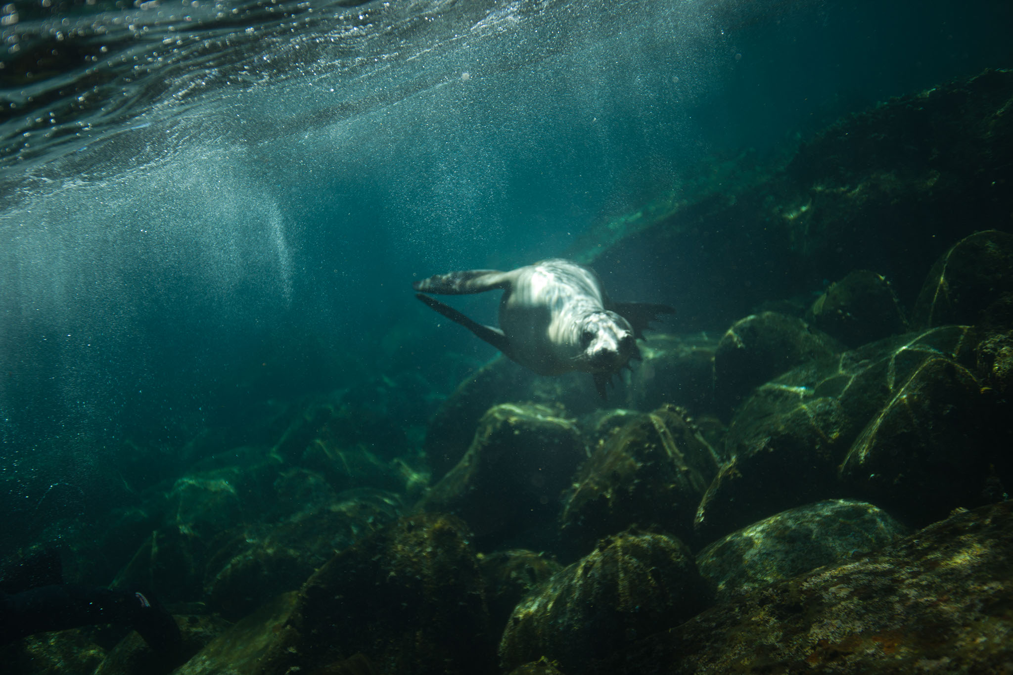 TimWatters-Underwater-06.jpg