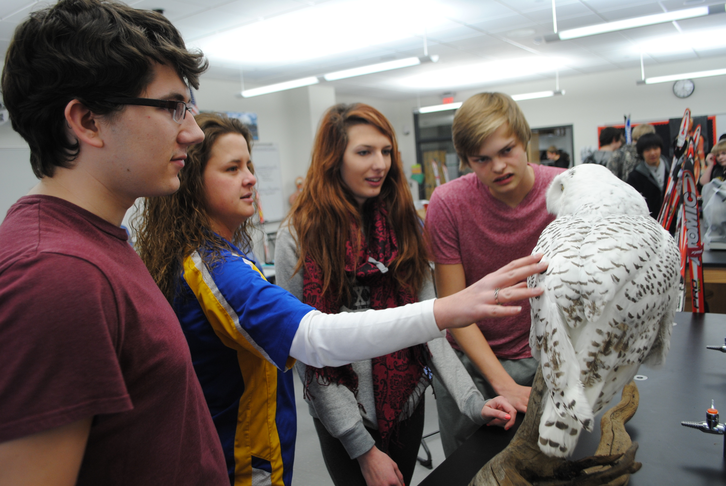 "WDC High School students were immediately curious about the Snowy Owl when it arrived in Kelly Shrode's science classroom on Monday, Jan. 13. ""It will be an interesting addition to our classroom,"" said Shrode."