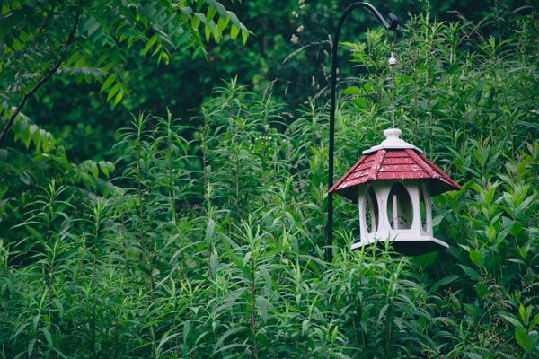 A Little Birdfeeder at Clearfield Cottage in NC