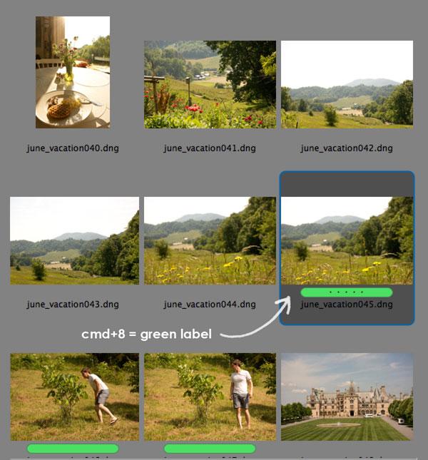 Adobe Bridge short cut for labeling photos